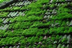 Alte Dach-Fliesen mit Moos Lizenzfreie Stockfotos