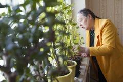 Alte Dame in der gelben Jacke am Fenster mit Blumen Lizenzfreie Stockfotos