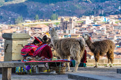 Alte Damen mit Lamas in Cusco, Peru Stockfoto