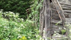 Alte demolierte hölzerne Wand auf dem Haus stock video