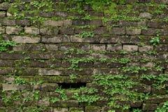 Alte dunkle Backsteinmauer mit grünem Moos Lizenzfreie Stockfotos