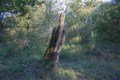 Alte Eiche geschlagen durch Blitz Der Baum geschlagen durch Blitz Lizenzfreie Stockfotografie