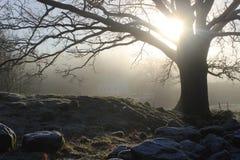 Alte Eiche im Winter Stockbild