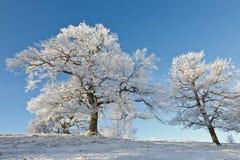 Alte Eichenbäume auf dem Hügel Lizenzfreie Stockfotos