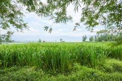 Alte erbe da un lago con le montagne nella foschia Fotografie Stock