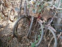 Alte Fahrräder verlassen in der Natur Stockbild
