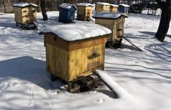 Alte Farbbienenbienenstöcke im Schnee Lizenzfreies Stockbild