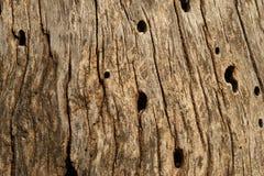 Alte faule Baumrindebeschaffenheit Stockbild