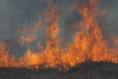 Alte fiamme su fondo scuro Fotografia Stock