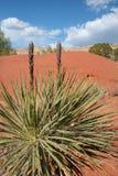 Alte fioriture del deserto Fotografie Stock Libere da Diritti