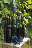 Alte Flaschen selbst gemachter Wein fotografierten vor dem hintergrund der Rebe Stockfotos