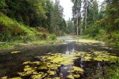 Alte Flussbank mit Reflexionen im Wasser Stockfoto