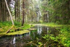 Alte Flussbank mit Reflexionen im Wasser Lizenzfreies Stockbild
