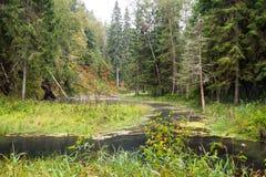 Alte Flussbank mit Reflexionen im Wasser Stockfotografie
