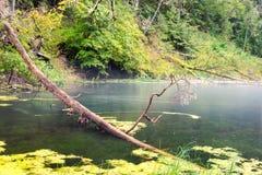 Alte Flussbank mit Reflexionen im Wasser Lizenzfreie Stockfotografie