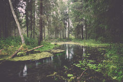 Alte Flussbank mit Reflexionen im Wasser weinlese Stockbilder