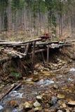 Alte Forstwirtschaft mit Gebirgsstrom Lizenzfreie Stockfotografie