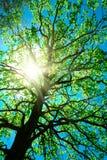 Alte Frau des Baums auf einem Himmelauszug Lizenzfreie Stockfotografie