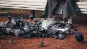 Alte Frau, die auf einer Bank sitzen und Zufuhren, die eine Menge von Tauben panieren stock video footage