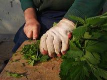Alte Frau schneidet Nesseln für Hauptgeflügel, Leben im Dorf Lizenzfreies Stockfoto