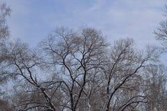 Alte Frauen von Bäumen im Winter Lizenzfreie Stockfotografie