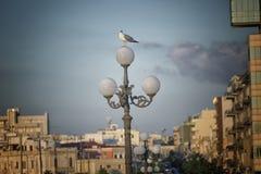 Alte Gasse in der alten Stadt von Gallipoli (Le) Stockfoto