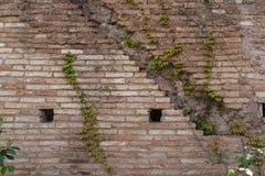 Alte gealterte Backsteinmauerbeschaffenheit mit nettem grünem Efeu lässt Kriechpflanze c Lizenzfreies Stockfoto