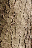 Alte gebrochene Barke Stockfoto