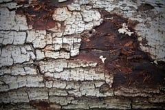 Alte gebrochene Barkenbeschaffenheit Lizenzfreies Stockbild