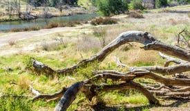Alte gebrochene Baumaste aus den Grund nahe einem kleinen Fluss in Santa Monica Mountains von Kalifornien Lizenzfreie Stockfotos