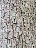 alte gebrochene Baumrindebeschaffenheit Stockfotos