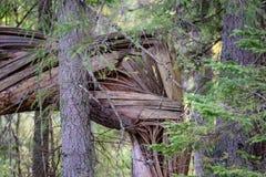 alte gebrochene Baumstümpfe im Wald im Sommer Stockbild