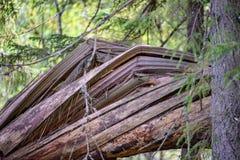 alte gebrochene Baumstümpfe im Wald im Sommer Lizenzfreies Stockfoto