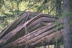 alte gebrochene Baumstümpfe im Wald im Sommer - Weinlesefilmblick Stockbild