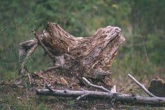 alte gebrochene Baumstümpfe im Wald im Sommer - Weinlesefilmblick Lizenzfreies Stockbild