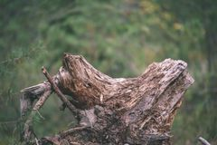 alte gebrochene Baumstümpfe im Wald im Sommer - Weinlesefilmblick Stockfotos