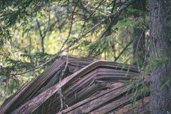 alte gebrochene Baumstümpfe im Wald im Sommer - Weinlesefilmblick Lizenzfreie Stockfotos