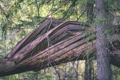 alte gebrochene Baumstümpfe im Wald im Sommer - Weinlesefilmblick Stockfotografie