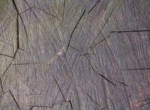 Alte gebrochene Stumpfnahaufnahme Stockbilder