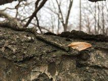 Alte gefallene Baumrinde, Nahaufnahme Herbstwaldhellgelbes Blatt Lizenzfreie Stockfotografie