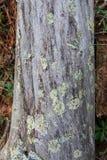 Alte gefallene tote Baumnahaufnahme Lizenzfreies Stockfoto