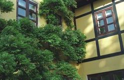 Alte gelbe gezimmerte Wand mit Fenstern und Bäumen Stockbild