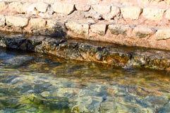 alte, gelbe, Stein-, nasse Schritte von Bürsten werden mit grünem Schlamm und Schlamm, Abfall in das Meer, ein See, ein Ozean und Stockfotografie
