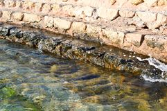 Alte gelbe Steinschritte von den Bürsten werden mit grünem Schlamm und Schlamm, Abfall in das Meer, ein See, ein Ozean und Wasser Lizenzfreies Stockbild