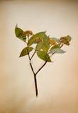 Alte gepresste Blumen mit Marke Stockfotos