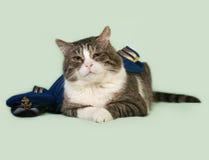 Alte gestreifte und weiße Katze in der Marineuniform mit der Kappe, die auf gre liegt Stockfotografie
