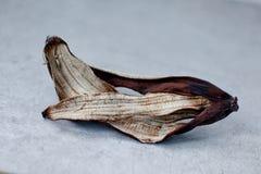 Alte getrocknete Schale der Banane Lizenzfreies Stockfoto