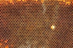 Alte gezogene Honigbienenbienenwabe Stockfotografie