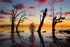 Alte gnarly Bäume auf dem See bei Sonnenuntergang Stockbild