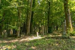 Alte Gräber in einem Wald Lizenzfreie Stockbilder